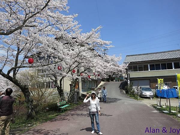 6.這邊的櫻花剛好滿開哦~~