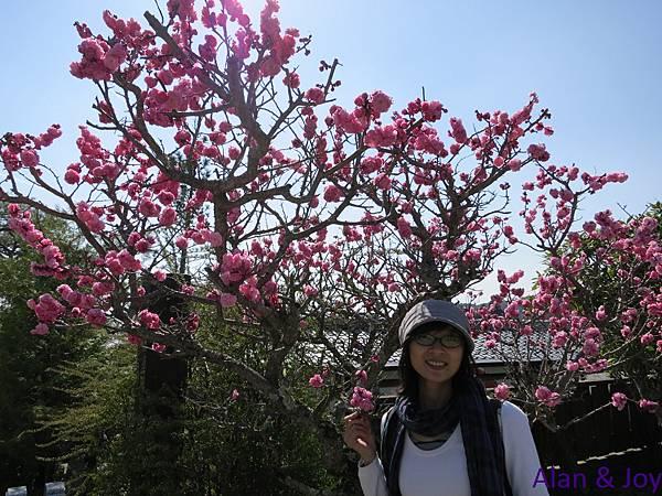32.桃花朵朵開,哈!!