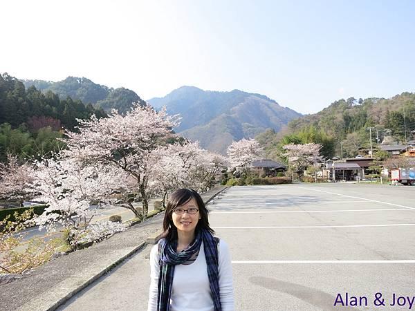 55.停車場旁的櫻花