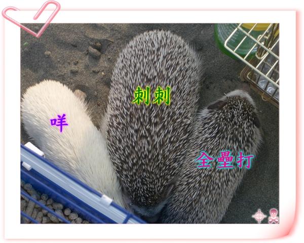 IMGP7327.jpg