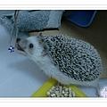 snapshot20100328141634.jpg