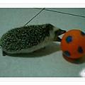 snapshot20100328133306.jpg