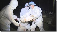 20150113_H5N2防疫概念股