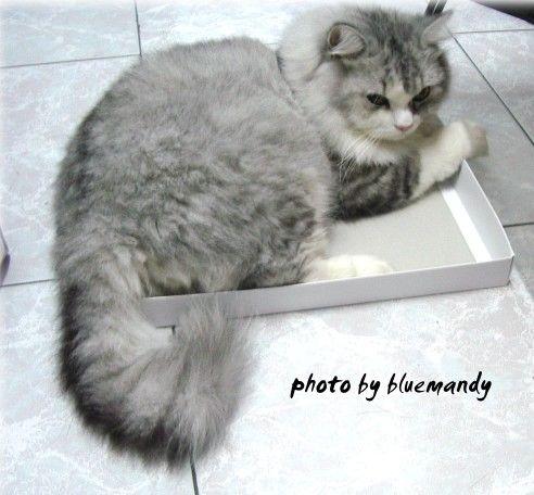 盒子,很小ㄟ