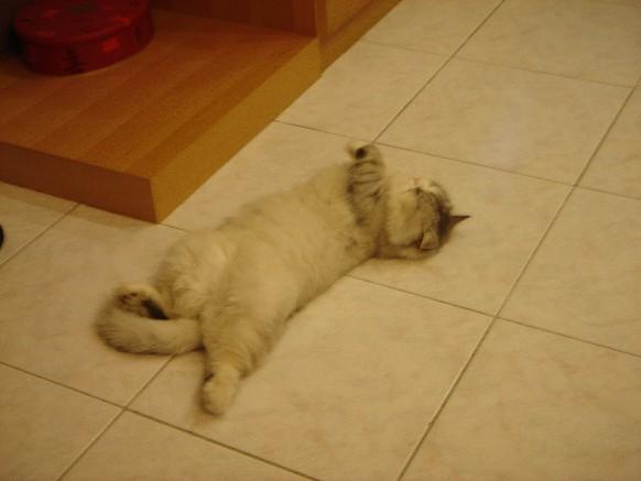 睡翻了...照模糊了