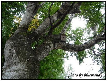 拓真館外樹上的鳥窩