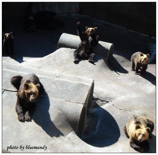 可愛的熊牧場
