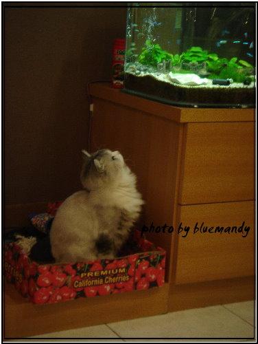 魚貓咪2.jpg