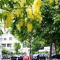 亞洲大學黃金雨