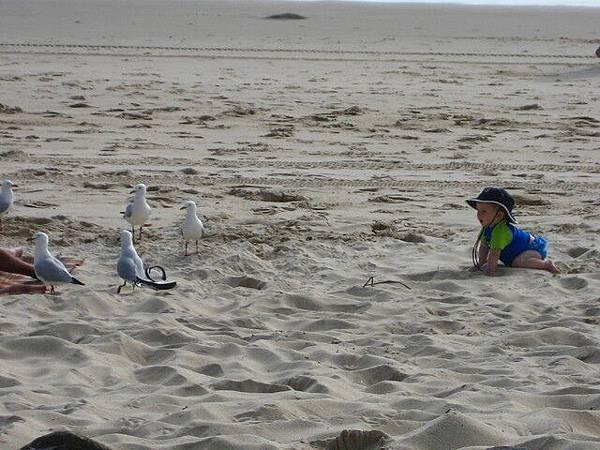 可愛小鬼想找海鷗聊天