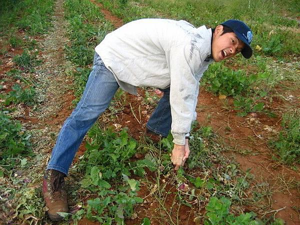 這鬼植物長在地面上,結果太硬撐,腰受傷了