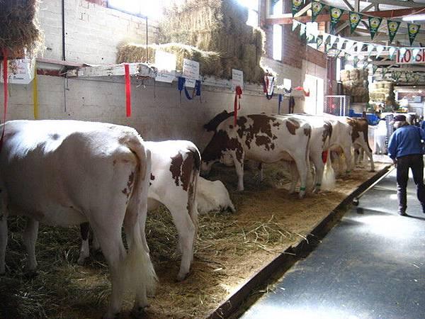會場中也有介紹有關農牧的相關知識,是老少咸宜的好去處