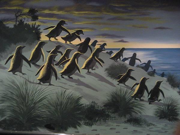 島上最著名的就是企鵝歸巢,很可愛,但是不能拍照。