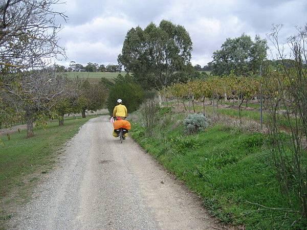 我們造訪些漂亮的葡萄園
