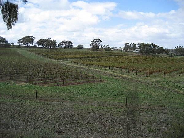 這種風光跟我當初在葡萄園工作時的景色截然不同啊