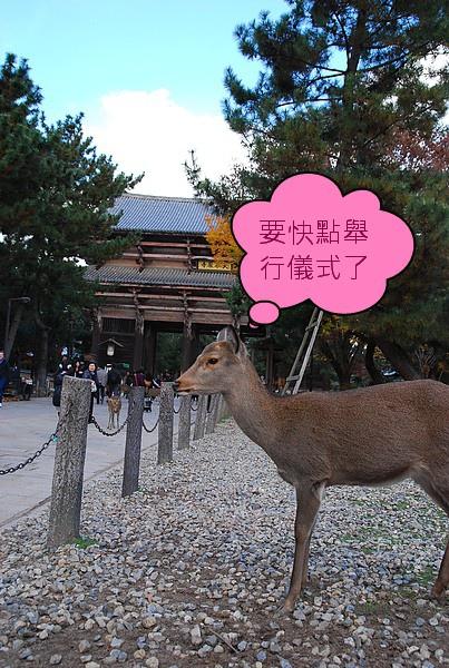 東大寺的鹿.jpg