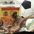 世足賽章魚哥保羅對德西大戰