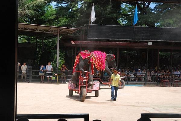 0308東芭樂園之大象騎車.jpg