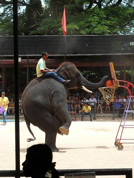 0310東芭樂園之大象灌藍.jpg