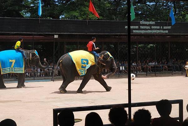 0311東芭樂園之大象踢球1.jpg