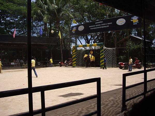 0312東芭樂園之大象踢球2.JPG