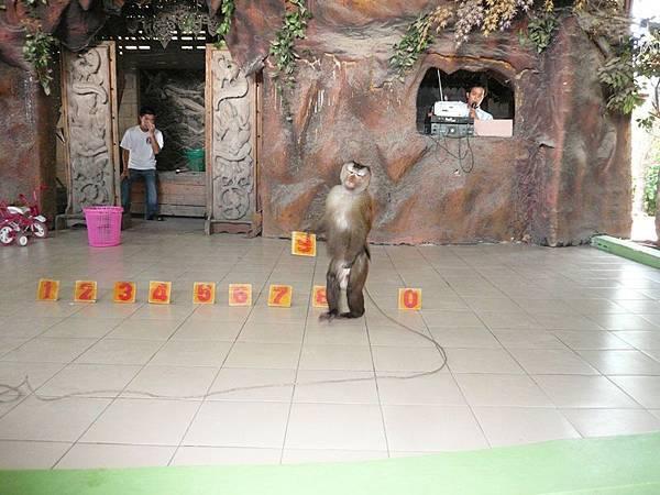 0317東芭樂園之猴子猜數字.jpg