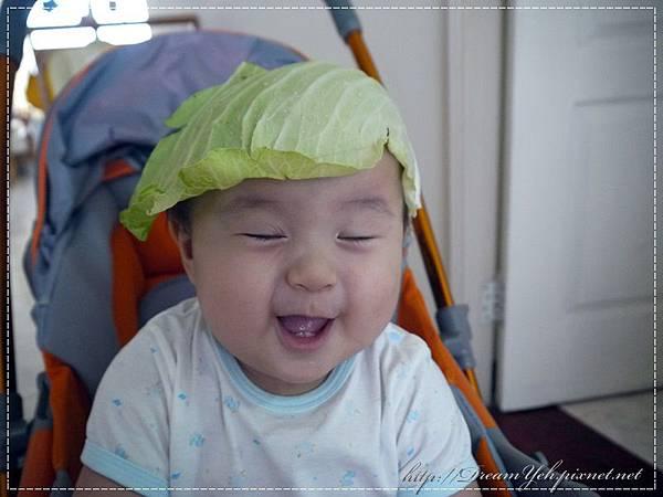 高麗菜葉帽