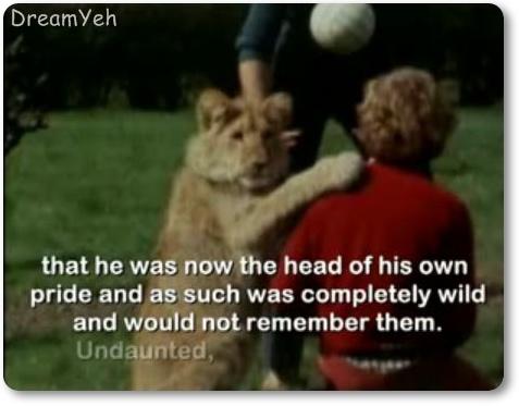 LION FRIEND