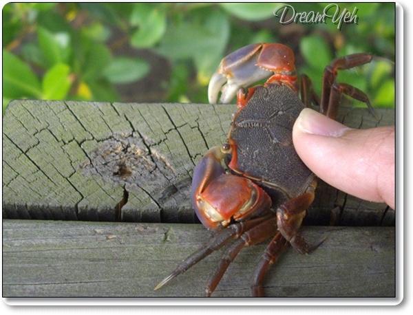 新豐紅樹林03 釣螃蟹