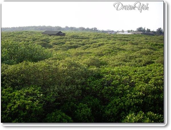 新豐紅樹林04