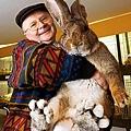 世界最大兔子amy01