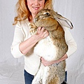 世界最大兔子amy02