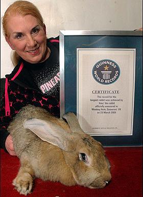 世界最大兔子amy06