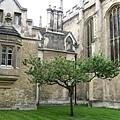 牛頓蘋果樹