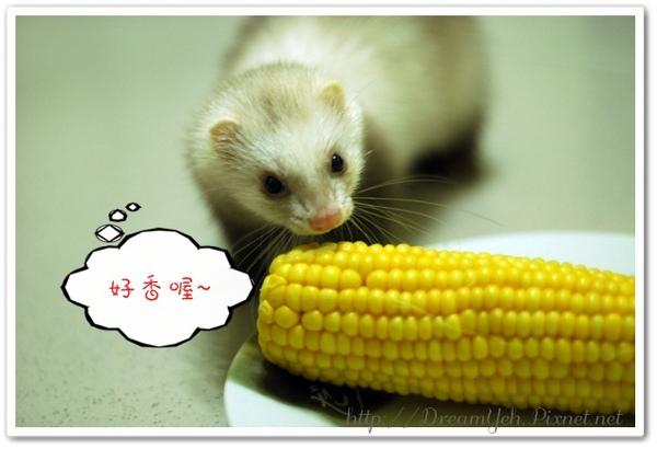 貂貂也想吃玉米