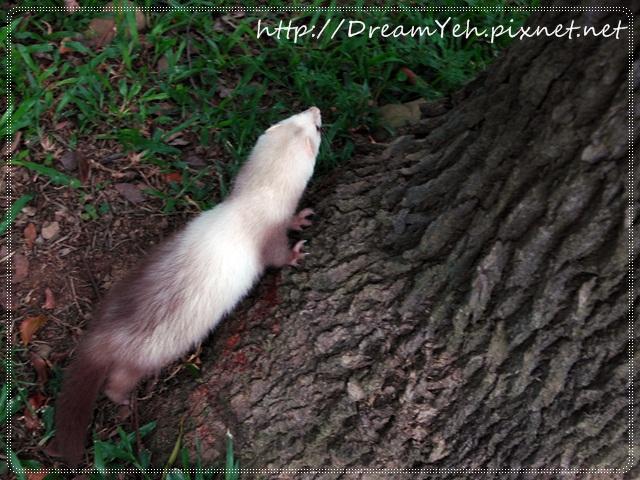 08貂‧想爬樹看看.JPG