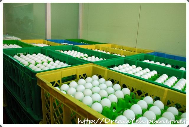 16一排排漂亮的蛋.JPG