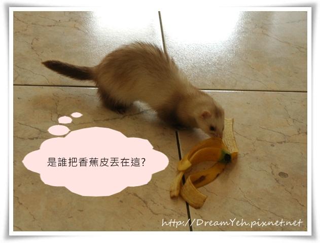 02是誰把香蕉丟在這.JPG