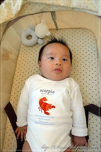 龍蝦裝嬰兒