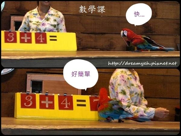 鸚鵡算數學