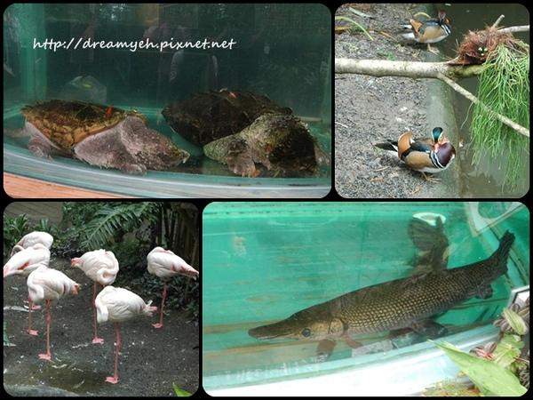 鱷龜 鴛鴦 紅鶴 鱷魚炸彈