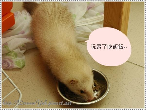 貂‧玩累吃飯飯