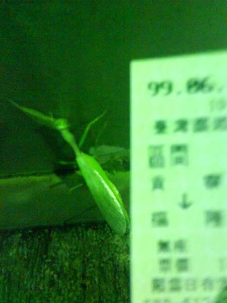 螳螂 在月台上
