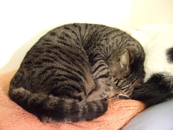 同場加映胖貓睡相 XD