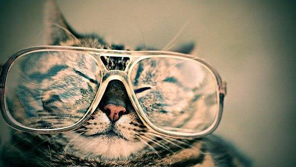 cat-984097_640.jpg