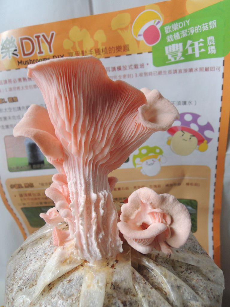 豐年靈芝菇類生態農場091.jpg