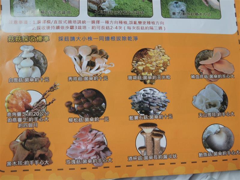 豐年靈芝菇類生態農場豐年靈芝菇類生態農場124.jpg