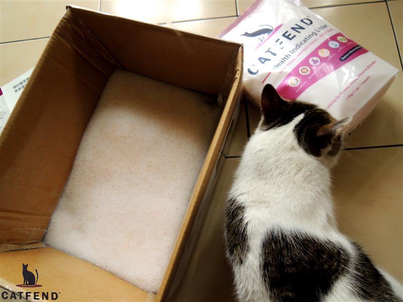 catfend 卡芬魔幻貓砂 030.jpg