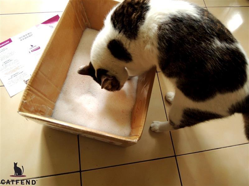 catfend 卡芬魔幻貓砂 039.jpg