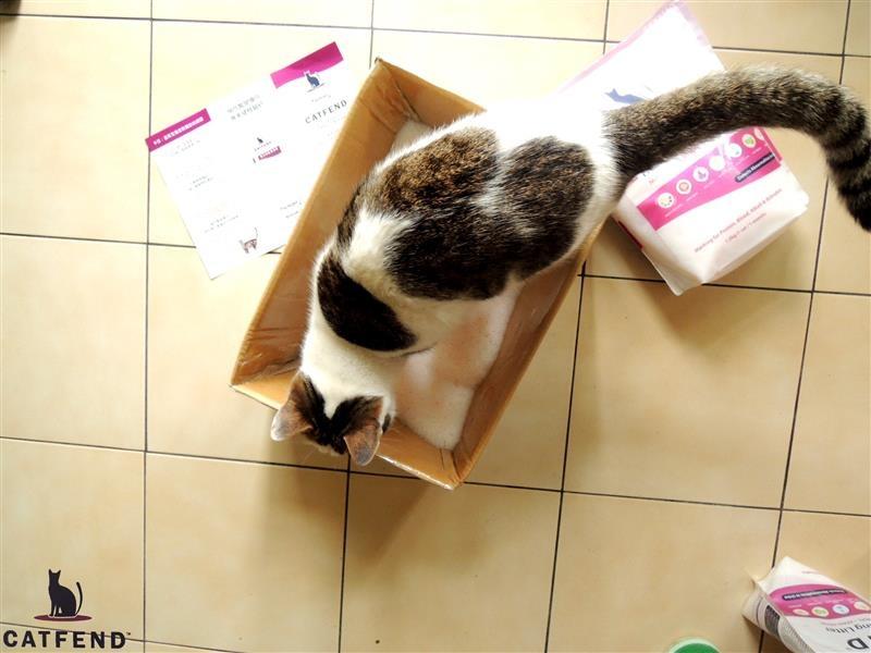 catfend 卡芬魔幻貓砂 042.jpg